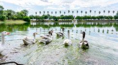 Ubicado sobre Ruta 95 kilómetro 1111 Complejo Ecológico Municipal un lugar de preservación y recuperación de especies